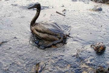 Land spills